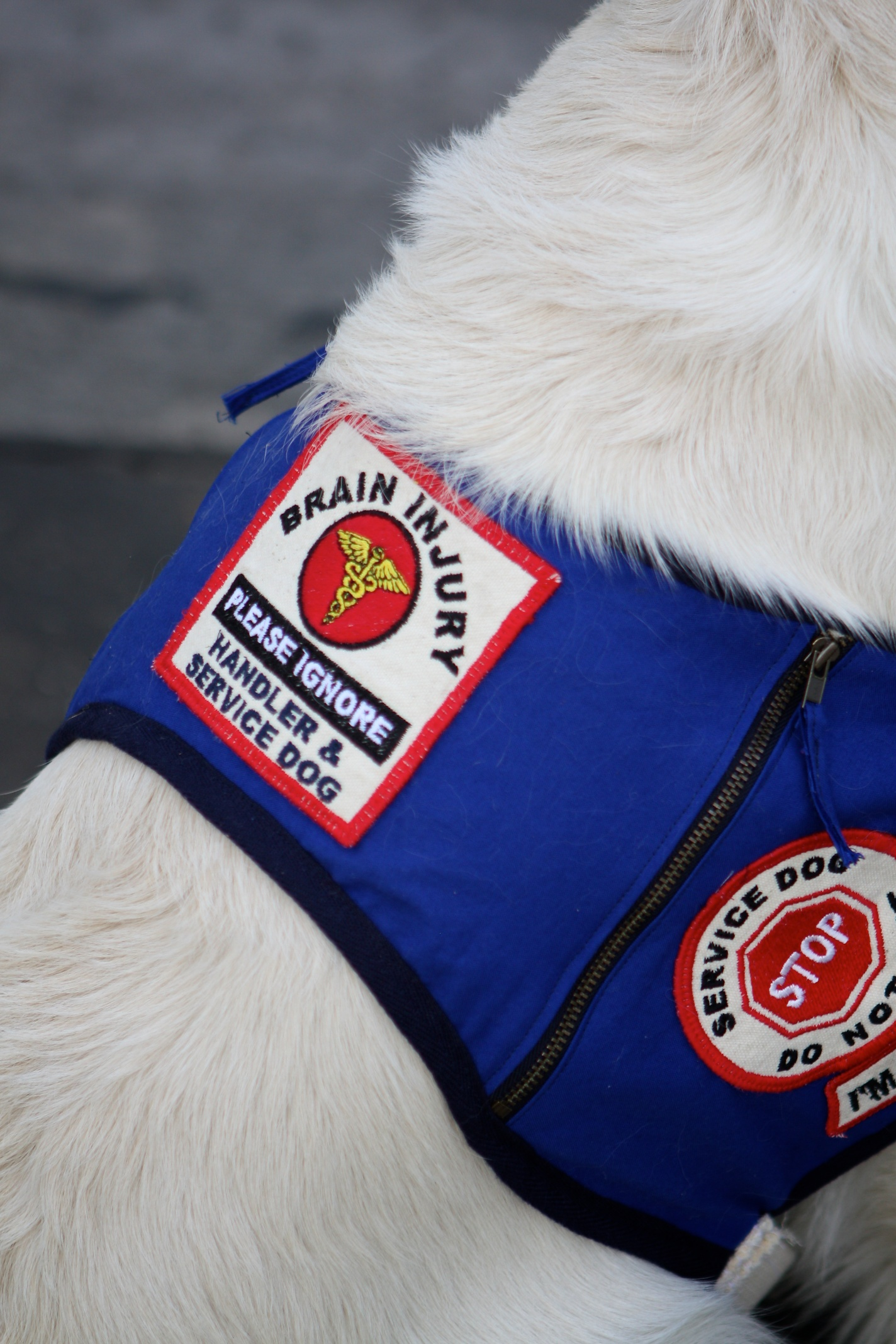 """Service Dog Vests And Patches Service Dog."""" This Patch"""
